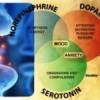 Ossitocina: lormone che rende fedele luomo