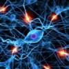 Connessioni fra neuroni: il ruolo fondamentale della microglia