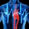 Le immagini delle cellule del muscolo cardiaco su nanoscala per determinare il danno